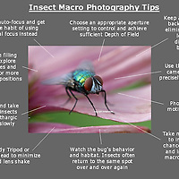 How to take better macro photography images - a free photo tip cheat sheet ready for download.