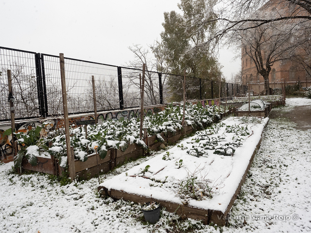 Madrid, Spain. 7th January, 2021. A urban green garden of Madrid covered with snow during storm Filomena. Storm Filomena hits Madrid (Spain), a weather alert was issued for cold temperatures and heavy snow storms across Spain; according to the weather agency Aemet is expected to be one of the snowiest days in recent years. © Valentin Sama-Rojo.