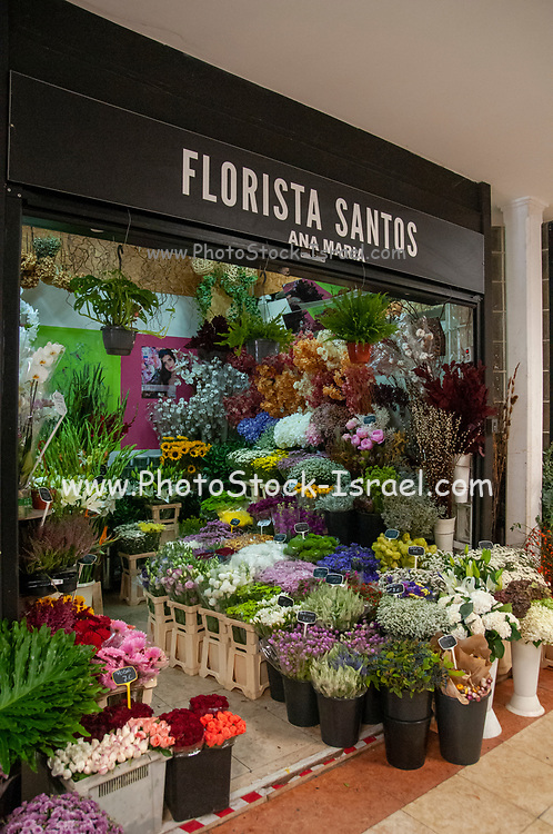 Flowers and plants at a florist in an indoor market, Mercado da Ribeira, Lisbon, Portugal
