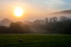 Sheep are surrounded by fog at dawn in the tiny Welsh village of Llanddewi'r Cwm, near Builth Wells in Powys, after a night with temperatures dropping to three degrees centigrade. Photo credit: Graham M. Lawrence/LNP