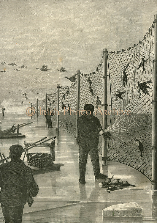 Pomeranian fishermen netting birds, so supplementing their income in winter when unable to fish. Engraving 1894