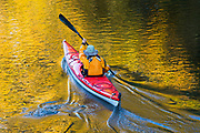 A kayaker plies the waters of the Sammamish River in Bothell, Washington, which reflect the golden fall color of the trees that line its banks.