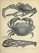 Cancer Crabs and Lobsters Copperplate engraving From the Encyclopaedia Londinensis or, Universal dictionary of arts, sciences, and literature; Volume III;  Edited by Wilkes, John. Published in London in 1810