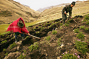 Cultivating potatoes on a windy afternoon, Ermelinda Ayme wraps her baby in two shawls tied in different directions. When she and her husband Orlando arrived at the field, a ten-minute walk from their home, they said a quick prayer to Pacha Mamma (Mother Earth) before working the land. Occasionally, Ermelinda has to adjust the baby's position, but generally she has no problem carrying her tiny passenger. Hungry Planet: What the World Eats (p. 117). (MODEL RELEASED IMAGE).