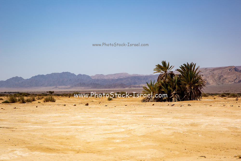 Palm tree at Timna park Landscape, Arava, Israel