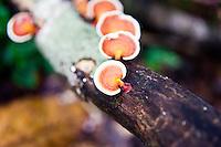 Colourful orange fungi on the trunk of a fallen tree in the jungle.