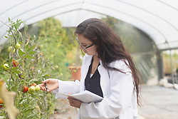 Female scientist inspecting plants at greenhouse, Baden-Wuerttemberg, Freiburg im Breisgau, Germany