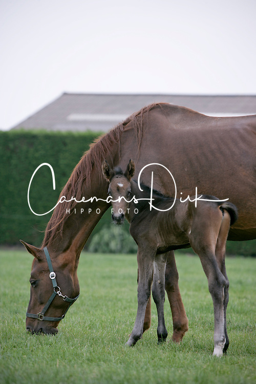Foals and mare on the meadow<br /> Kieldrecht 2006<br /> Photo© Dirk Caremans