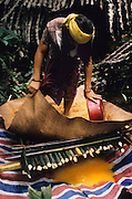 PENAN SAGO, MALAYSIA. Sarawak, Borneo, South East Asia. Nomadic Penan retrieving flour from the sago root. Tropical rainforest and one of the world's richest, oldest eco-systems, flora and fauna, under threat from development, logging and deforestation. Home to indigenous Dayak native tribal peoples, farming by slash and burn cultivation, fishing and hunting wild boar. Home to the Penan, traditional nomadic hunter-gatherers, of whom only one thousand survive, eating roots, and hunting wild animals with blowpipes. Animists, Christians, they still practice traditional medicine from herbs and plants. Native people have mounted protests and blockades against logging concessions, many have been arrested and imprisoned.