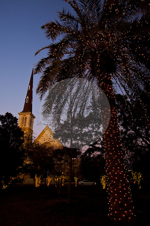 Fairy lights decorate a palm tree for Christmas in Marion Square Charleston, SC. The steeple of the Citadel Square Baptist Church is in the background. (photo by Charleston SC photographer Richard Ellis)