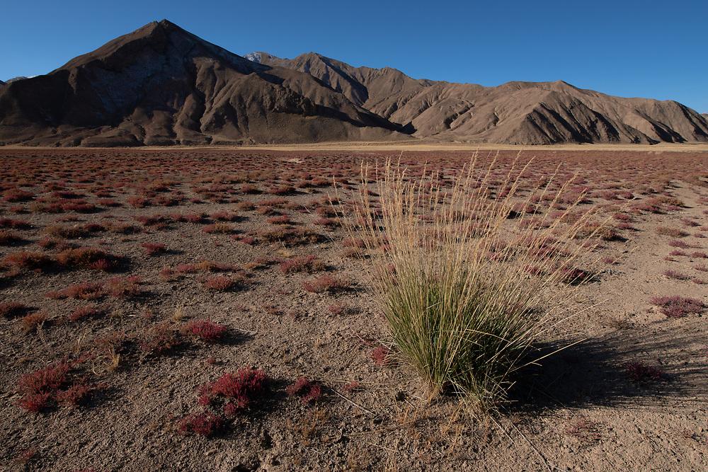 Dulan nature reserve, Tibetan Plateau, Qinghai, China