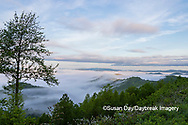66745-04914 Early morning fog along Foothills Parkway Great Smoky Mountains National Park TN
