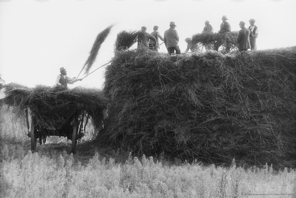 Harvesting, England, 1942