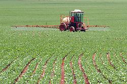 Floresta, PR, Brasil     Nov/2005.Plantio direto de soja e aplicacao de defensivos agricolas na lavoura./ Direct plantation of soya and aplication of pesticides..Foto Marcos Issa/Argosfoto