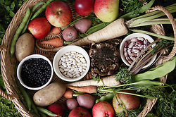 A basket full of homegrown fruit and vegetables; produce from allotments,