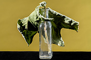 drying fig leaf in an old glass bottle still life