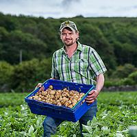 Branston Potatoes - Boydston Farm