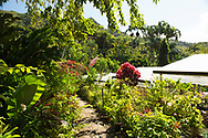 A wide variety of tropical plants on sale at the St. Rose Nursery, La Mode, St. George's, Grenada, West Indies, Grenada