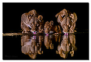 Lions drinking during night. Zimanga, South Africa. Nikon D850, 24-70mm @ 70mm, f2.8, 1/640sec, ISO1600, Artificial LED-light
