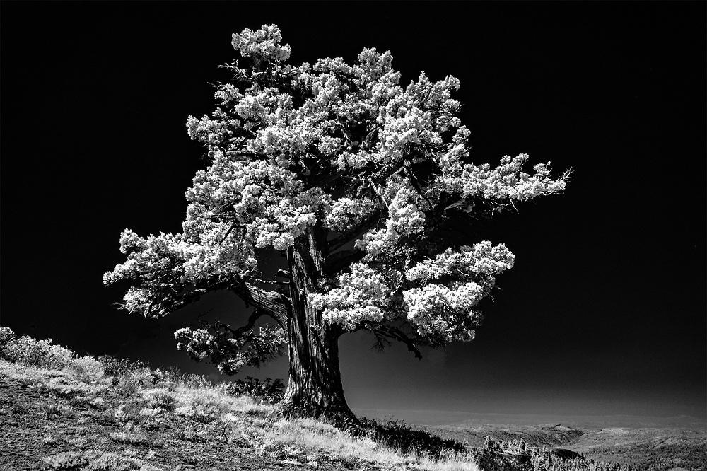 Sierra Lone Pine, Pinecrest, CA