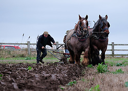 © Licensed to London News Pictures. <br /> 30/11/2014. <br /> <br /> Boulby, United Kingdom<br /> <br /> Belgian Draught Horses Cindy (L) and Daisy are worked by their owners Marie and Paddy Pennock during the ploughing match that takes place each year on fields next to the picturesque Yorkshire coastline near Staithes. Farmers attend each year to demonstrate their ploughing skills and to help raise money for charity with proceeds from this year going to Charlie Brown Cancer Care in Newcastle.<br /> <br /> <br /> Photo credit : Ian Forsyth/LNP
