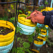 CAPTION: Romanito tends to vegetables in East Rembo's urban garden. Plant pots are made from recycled bottles collected by mobile waste collectors. LOCATION: Materials Recovery Facility and Urban Garden, East Rembo Barangay, Makati City, Metro Manila, Philippines. INDIVIDUAL(S) PHOTOGRAPHED: Romanito Verecio.