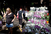 Orchid stall. Borough Market is a thriving Farmers market near London Bridge. Saturday is the busiest day.