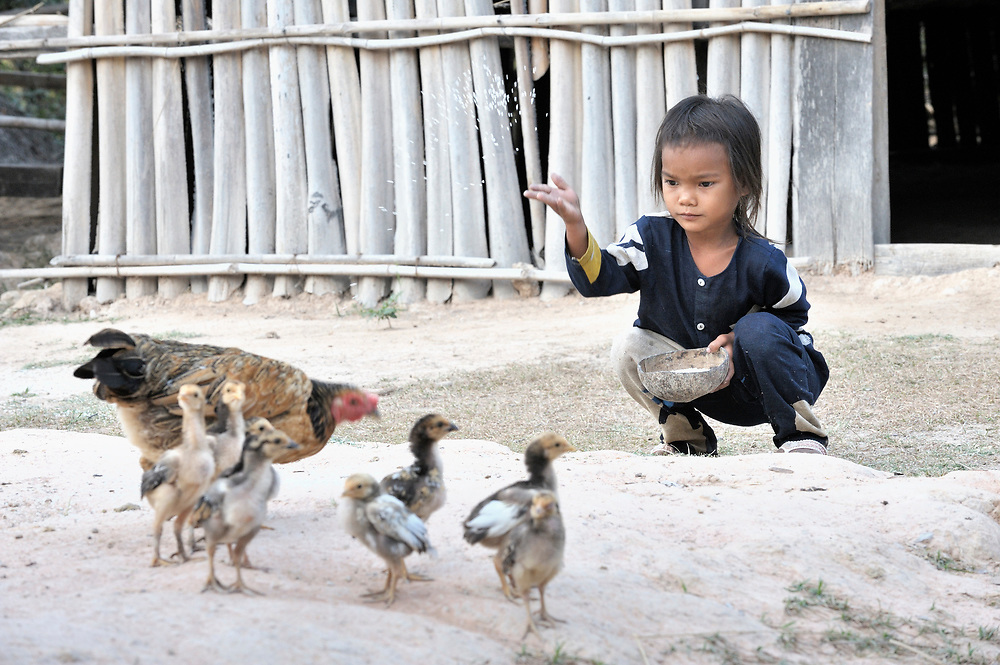 Kong Tea, 6, feeds chickens in Thnort Rorleung, a village in the Kampot region of Cambodia.