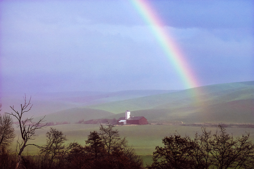 Wheatfield and barn, springrainbow, near Walla Walla, Washington, USA