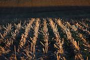 Detail of harvested field in the Palouse Valley near Spokane, Washington.
