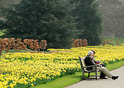 © Licensed to London News Pictures. 22/03/2012. Kew, UK. A couple sit on a bench near the daffodil display. People enjoy the spring sunshine in The Royal Botanical Gardens at Kew today, 22 March 2012. Temperatures are set to reach 18 degrees celsius in some parts of the UK today. Photo credit : Stephen SImpson/LNP
