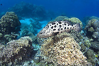Diving and Exploring in Tropical North Queensland, Australia. Great Barrier Reef, Cod Hole, minke whales and Kuranda train ride near Cairns.