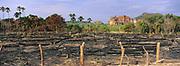 Cleared for Cattle<br />Slash and Burn<br />Cerrado Habitat.  BRAZIL.  South America<br />Threatened Habitat