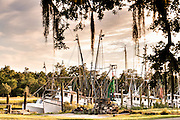 Shrimp boats tied up at the docks along Jeremy Creek in the village of McClellanville, South Carolina.