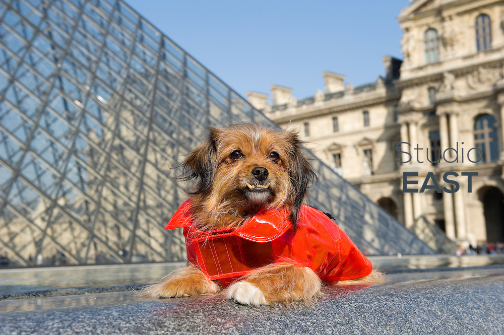 Noodle is wearing an orange outfit by 'Ware of the Dog' in Louvre Museum's courtyard by the Pyramid, in Paris, France, on March 4, 2013. Photo by Lucas Schifres/Pictobank