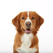 20121019 3M  Dog Tiff Uploads