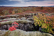 Autumn in Þingvellir National Park, south-west Iceland