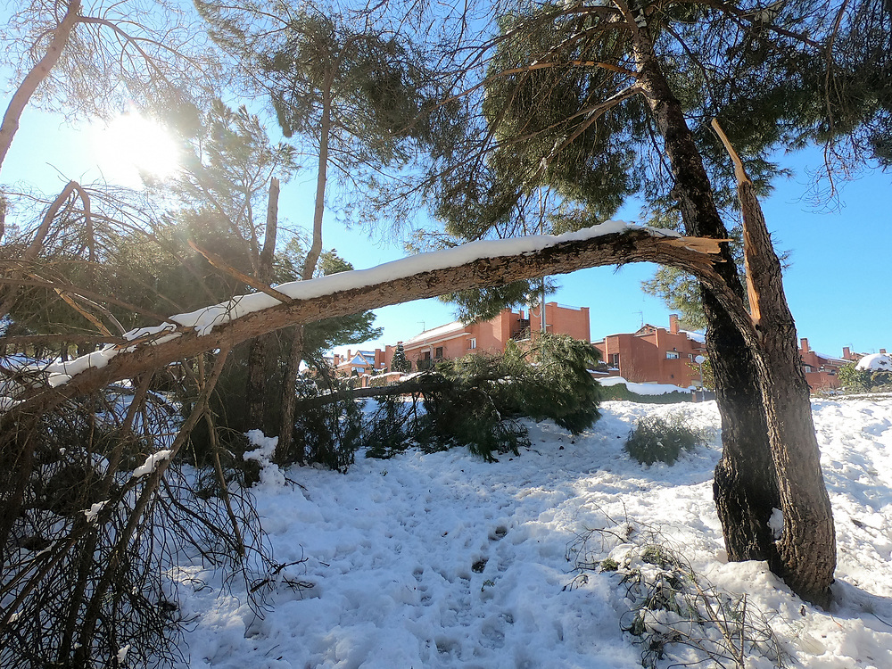 MADRID, SPAIN - JANUARY 10: Trees wrecked at a public park in Majadahonda, Madrid, Spain. The heavy snowfall on January 9 followed by temperatures plummeting up to -7C degrees has left a mark on roads and streets all over the Madrid region.