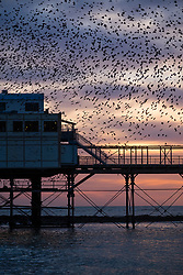 © Licensed to London News Pictures.  23/10/12018. Aberystwyth, UK. Thousands of tine starlings perform elegant aerial balletic 'murmurations' in the sky above Aberystwyth. Aberystwyth is one of the few urban roosts int UK and draws people from all over the UK to witness the nightly displays. Photo credit: Keith Morris/LNP
