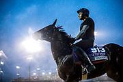 November 1-3, 2018: Breeders' Cup Horse Racing World Championships. Pocket Dynamo