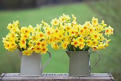 Narcissus in grey jugs