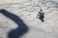 NEW YORK  2020V10<br /> <br /> Det är gott om ekorrar i Central Park<br /> <br /> Foto: Per Danielsson/Projekt.P