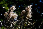 Jeceaba _ MG, Brasil...Silhueta de uma planta em Jeceaba, Minas Gerais...The tree in Jeceaba, Minas Gerais...Foto: BRUNO MAGALHAES / NITRO