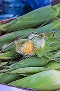 Stall selling fresh corn on the cob Photographed at the Carmel Market, Tel Aviv, Israel