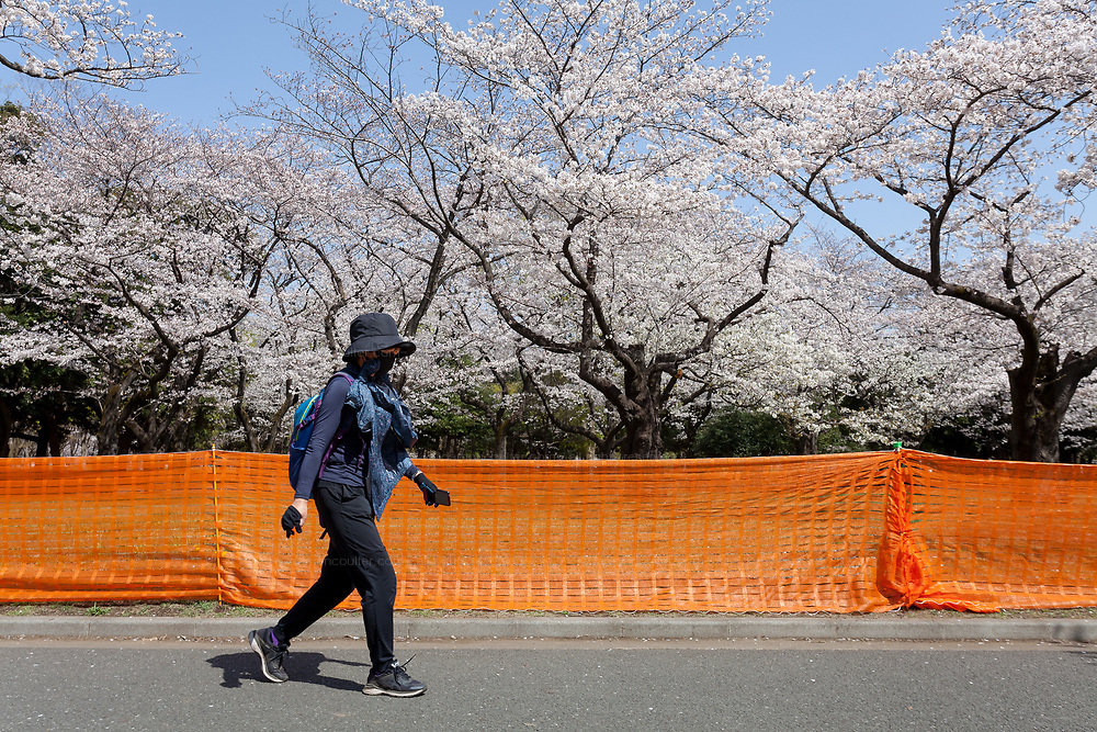 A Japanese woman walks past measures to avoid people gathering for Hanami parties under the cherry blossoms in Yoyogi Park, Shibuya, Tokyo, Japan. Friday March 26th 2021, Though Tokyo lifted its Coronavirus State of  Emergency at midnight on March 21st the annual Hanami , cherry blossom parties and other gatherings of large number of people are still limited and discouraged.