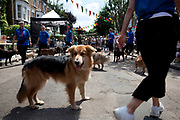 Dog's perform a show for the people at a street Fete on a sunny Summers day in in Hampstead in West London. This wa s a street party for the locals with food, and games and junk selling.