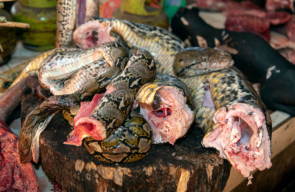 Phyton snake prepared and sold as fresh food at Tomohon extreme market, Minahasa, north Sulawesi, Indonesia.