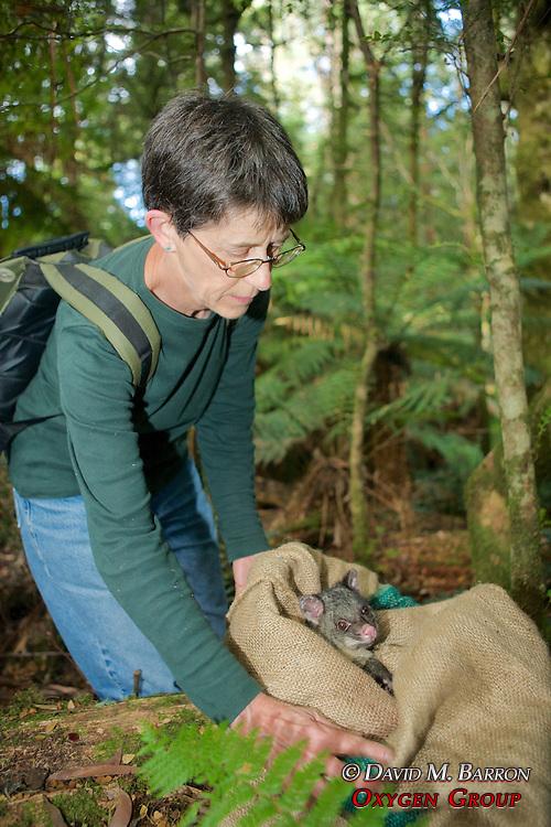 Jean Dubach Releasing Mountain Brushtail Possum