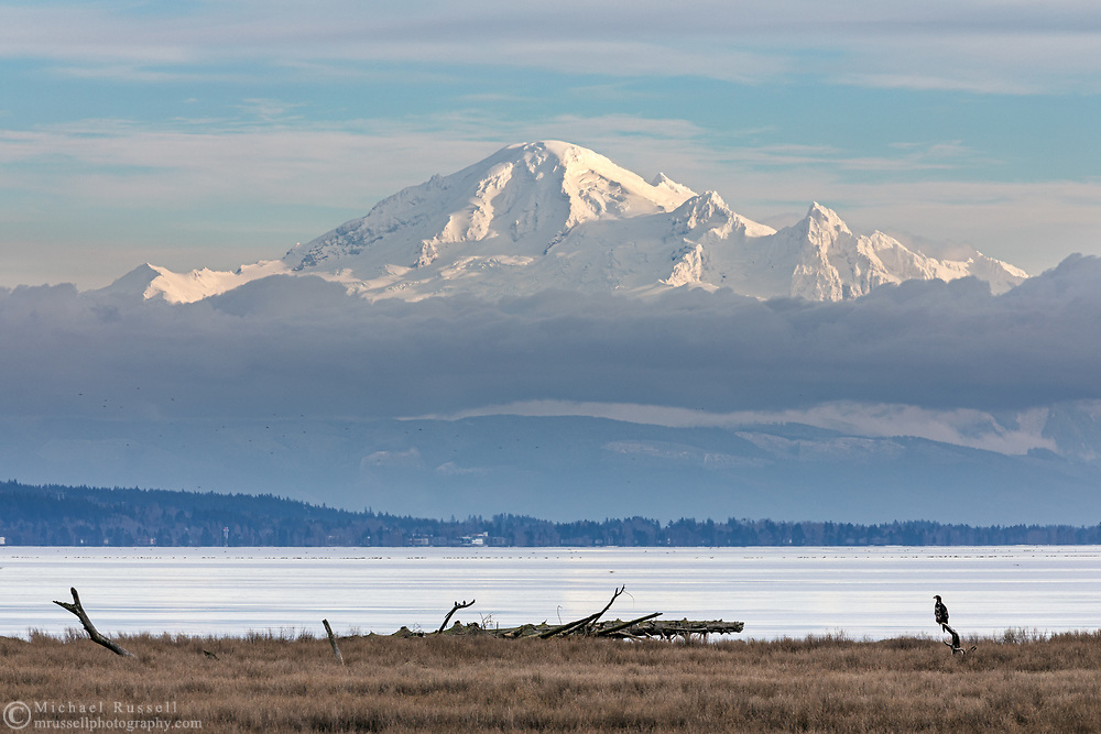 A juvenile Bald Eagle (Haliaeetus leucocephalus) perched on a piece of driftwood next to Boundary Bay in Delta, British Columbia, Canada.  Mount Baker aka Komo kulshan (3286 m / 10780 ft) is in the background and is in Washington State, USA.