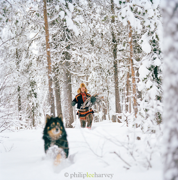 A Sami man and his dog collecting firewood in the forest of Lapland, Sweden